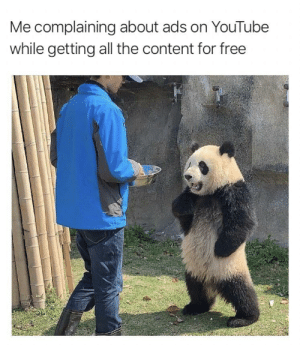Stop making me wait for my free shit by paysonthedog MORE MEMES: Me complaining about ads on YouTube  while getting all the content for free Stop making me wait for my free shit by paysonthedog MORE MEMES