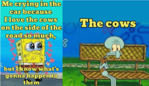 💔🐄: Me crying in the  car because  Ilove the cowS  on the side of the  road so much,  The cowS  but Iknow what's  gonna happento  them  Stin 💔🐄