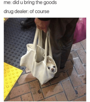Animals, Dogs, and Drug Dealer: me: did u bring the goods  drug dealer: of course Dog Memes Of The Day 32 Pics – Ep40 #dogs #dogmemes #lovelyanimalsworld - Lovely Animals World