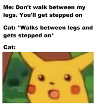 Good, Cat, and Get: Me: Don't walk between my  legs. You'll get stepped on  Cat: *Walks between legs and  gets stepped on*  Cat: good cat