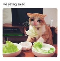 Memes, Ted, and Hilarious: Me eating salad  @hilarious.ted Anything else > Eating a salad 💯💯💯 (@hilarious.ted)