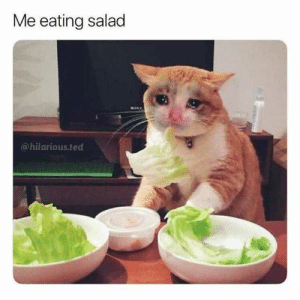 Memes, Ted, and Hilarious: Me eating salad  @hilarious.ted dopl3r.com - Memes - Me eating salad @hilarious.ted