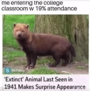 yes its the MaN: me entering the college  classroom w 19% attendance  S StuDocu  'Extinct' Animal Last Seen in  -|1941 Makes Surprise Appearance yes its the MaN