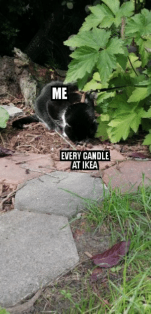 That smell: ME  EVERY CANDLE  AT IKEA That smell