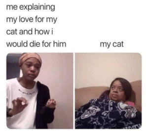 Dank, Love, and Memes: me explaining  my love for my  cat and how i  would die for him  my cat Me_irl by FBossMan MORE MEMES