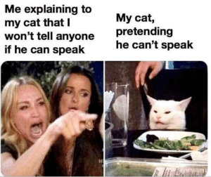 Memes, 🤖, and Cat: Me explaining to  my cat that T  won't tell anyone  if he can speak  My cat,  pretending  he can't speak