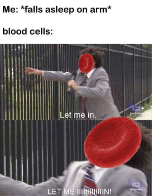 Blood, Arm, and Let Me In: Me: *falls asleep on arm*  blood cells:  Let me in  LET ME IIIHALIN!  adull