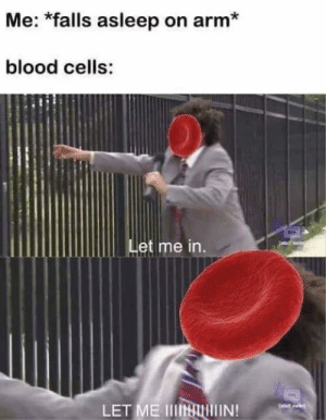 Italian (Language), Blood, and Arm: Me: *falls asleep on arm*  blood cells:  Let me in  LET ME IIIININ!