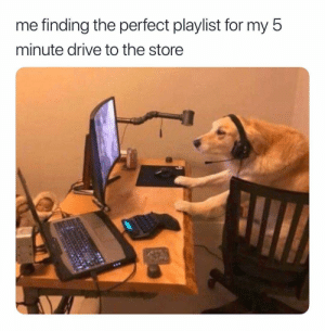 Drive, For, and Perfect: me finding the perfect playlist for my 5  minute drive to the storee AUX gotta be on point 😂📱 https://t.co/z2Be1DRv5i