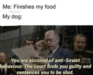 Sentences: Me: Finishes my food  U/natmatfoo  My dog:  You are accused of anti-Soviet.  behaviour. The court finds you guilty and  sentences you to be shot.