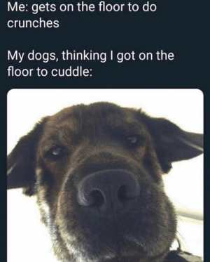 Still good boi tho: Me: gets on the floor to do  crunches  My dogs, thinkingI got on the  floor to cuddle: Still good boi tho