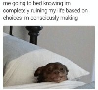 @shitheadsteve is the meme God.: me going to bed knowing im  completely ruining my life based on  choices im consciously making @shitheadsteve is the meme God.