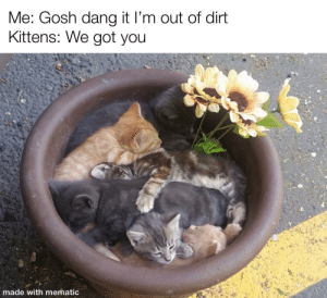 They look so comfy: Me: Gosh dang it I'm out of dirt  Kittens: We got you  made with mematic They look so comfy