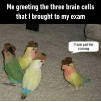 9gag, Memes, and Brain: Me greeting the three brain cells  that I brought to my exam  thank yall for  coming That 1 brain cell isn't even listening.⠀ -⠀ Check out our IG stories to stimulate your brain cells.⠀ exam final brain 9gag