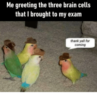 Brain, Three, and For: Me greeting the three brain cells  that I brought to my exam  thank yall for  coming Every exam ever