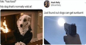 Delivery! Fresh hot doggo memes at your service!#dogs #funnydogs #dogmemes 3animalmemes #funnymemes #: Me: *has food*  Noah Reily  @NoahReily  My dog that's normally wild af:  Just found out dogs can get sunburnt Delivery! Fresh hot doggo memes at your service!#dogs #funnydogs #dogmemes 3animalmemes #funnymemes #