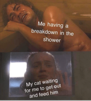 Dank, Memes, and Shower: Me having a  breakdown in the  shower  My cat waiting  for me to get out  and feed him Poor kitty by b1g_b1rd13 MORE MEMES
