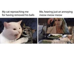 Memes: Me, hearing just an annoying  My cat reproaching me  for having removed his balls  meow meow meow Memes