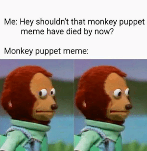 Meme, Reddit, and Monkey: Me: Hey shouldn't that monkey puppet  meme have died by now?  Monkey puppet meme: Omae wa mo