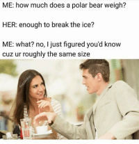 how much does a polar bear weigh: ME: how much does a polar bear weigh?  HER: enough to break the ice?  ME: what? no, I just figured you'd know  cuz ur roughly the same size