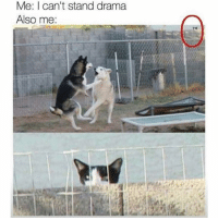 Friends, Hello, and Memes: Me: I can't stand drama  Also me: Hello friends I am back again (I was peer pressured by max) - mon texposts textpost