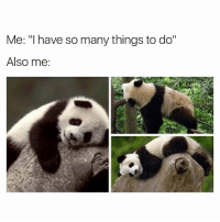 "🐼😴: Me: ""I have so many things to do""  Also me: 🐼😴"