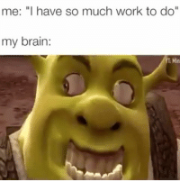 """Memes, Work, and Brain: me: """"I have so much work to do""""  my brain: What did I just watch?! 😂😂"""