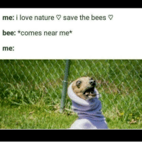 Comment bee things (ps thanks to my pal @tofubro123 for dis meme): me: i love nature save the bees  bee: *comes near me*  me: Comment bee things (ps thanks to my pal @tofubro123 for dis meme)
