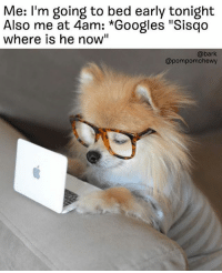 "But seriously does anybody know @pompomchewy: Me: I'm going to bed early tonight  Also me at 4am: *Googles ""Sisqo  where is he now""  @bark  @pompomchewy But seriously does anybody know @pompomchewy"