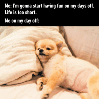 Dank, Friday, and Life: Me: I'm gonna start having fun on my days off.  Life is too short.  Me on my day off: Happy Friday! What are your plans for this weekend?