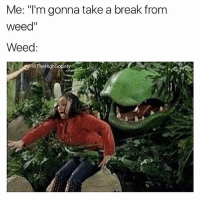 """Weed, Break, and Marijuana: Me: """"I'm gonna take a break from  weed""""  Weed:  @TheHighSociet  e TheHighSociety Breaks are for pussies! @thehighsociety"""