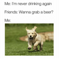 I'm on my way 🐕💨: Me: I'm never drinking again  Friends: Wanna grab a beer?  Me I'm on my way 🐕💨