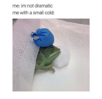 Memes, Relatable, and Cold: me: im not dramatic  me with a small cold: So relatable! 😂