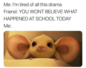 Dank, Memes, and School: Me: I'm tired of all this drama  Friend: YOU WONT BELIEVE WHAT  HAPPENED AT SCHOOL TODAY  Me: me_irl by ActuallyAMammal MORE MEMES