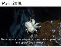 Pressure, Humans of Tumblr, and Creature: Me in 2018:  This creature has adaptea to the crushing pressure  and oppressive darkness.
