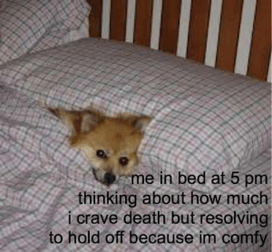 5 Pm: me in bed at 5 pm  thinking about how much  i crave death but resolving  to hold off because im comfy