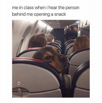 School, Girl Memes, and Class: me in class when i hear the person  behind me opening a snack my favorite part about school was eating in class