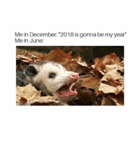 """Girl Memes, December, and Gonna: Me in December: """"2018 is gonna be my year""""  Me in June:"""