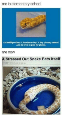 meirl: me in elementary school  An intelligent boy! A handsome boy! A boy of many talents!  And he loves to pose for photos.  me noW  A Stressed Out Snake Eats Itself  ni  OLOGY / ON MAY 18, 2014 AT 1000 AM/ meirl