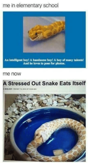 Dank, Memes, and School: me in elementary school  An intelligent boy! A handsome boy! A boy of many talents!  And he loves to pose for photos.  me noW  A Stressed Out Snake Eats Itself  ni  OLOGY / ON MAY 18, 2014 AT 1000 AM/ meirl by drgnslyr33 MORE MEMES