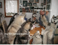 Wheres my my Minecraft family at?: me in m  minecraft hous  my 10+ tamed wolves Wheres my my Minecraft family at?