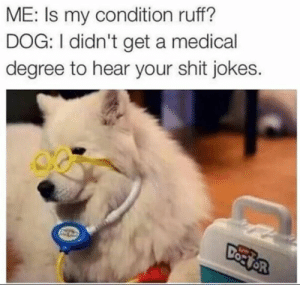 Animals, Dogs, and Fresh: ME: Is my condition ruff?  DOG: I didn't get a medical  degree to hear your shit jokes. Delivery! Fresh hot doggo memes at your service! #doggo #dogmemes #funny #funnydogs #dogs #pups #doggomemes #memes #funnymemes #lolmemes #lol #laughing #animals #funnyanimals