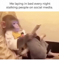 Currently. diply diplyvideo instavideo funny relatable monkey stalking socialmedia: Me laying in bed every night  stalking people on social media. Currently. diply diplyvideo instavideo funny relatable monkey stalking socialmedia