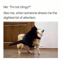 "Girl Memes, Dog, and Lock: Me: ""l'm not clingy!!""  Also me, when someone shows me the  slightest bit of attention: me trying to lock my dog in my room but he wants to leave"