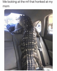 Funny, Memes, and Hilarious: Me looking at the mf that honked at my  mom 24 Really Hilarious Memes That Never Stop Being Funny #funnymemes