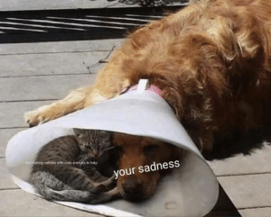After you see this image your sadness is gone: me making memes with cute animals to help  your sadness  C After you see this image your sadness is gone
