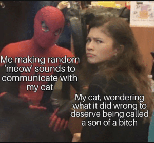 Meirl: Me making random  'meow' sounds to  communicate with  my cat  My cat, wondering  what it did wrong to  deserve being called  a son of a bitch Meirl
