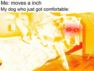 Comfortable, Got, and Dog: Me: moves a inch  My dog who just got comfortable