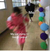 Live, Peace, and Cat: Me  My cat trying to  live in peace