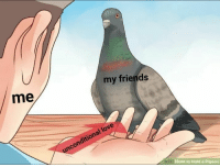 Me My Friends: me  my friends  unconditional love  ci How to Hold a Pigeon
